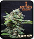 SALE - Yummy - Resin Seeds